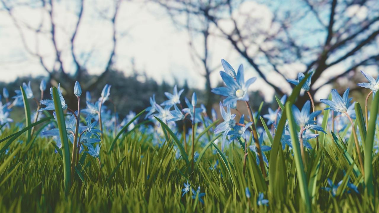 blue flowers in field